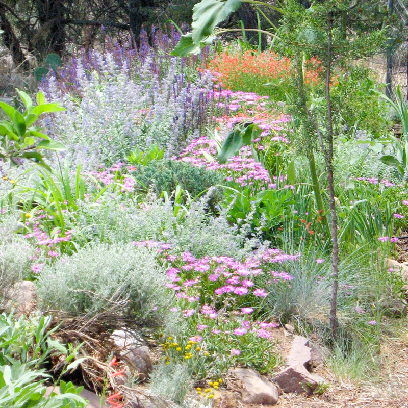 beverly's herb garden